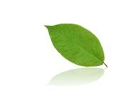 ACRECOは、生態系再生の加速をサポートします。